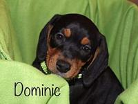 Dominic's story All SAAP animals are vet checked, UTD