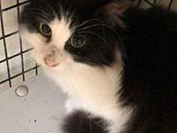 Domino's story PAW Animal Shelter is a high intake No