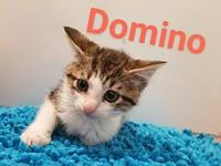 Domino's story Domino is a very sweet and shy little