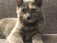 Domino's story Domino is a sweet little girl who loves