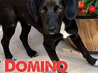 Domino's story Domino - super sweet, dog friendly, 6