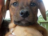 Donavan's story Name: Donavan Breed: Hound mix Date of
