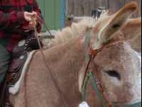 Looking for someone to adopt our pet donkey, Festus. I