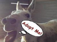 Donkey - Eeyore - Medium - Adult - Male - Horse Age: