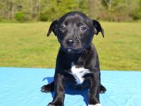 Donna is a super cute 7-8 week old Mixed Breed puppy,