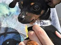 Donnie's story Donnie is a shy little boy, who is super