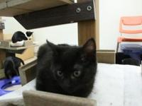 Donny's story I am a playful, affectionate kitten that