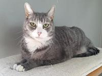 Dontay's story Dontay is a 7-year-old grey tabby and
