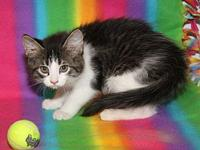 DORA--**ADOPTED**'s story **THIS KITTEN WILL BE