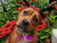 Dora's story Dora was lucky enough to find her foster