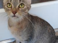 My name is Dora and I am a 1-2 year old sweetheart,