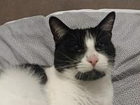 Dorey's story This pretty tuxedo girl is Dorey. She is