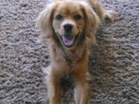 Dory is a light brown, 10 months old female