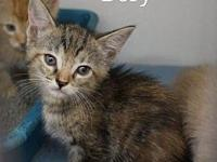 Dory's story Sullivan County Animal Shelter  380