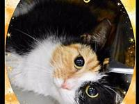 Dory's story Dory is such a very sweet cat and very