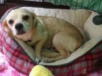 Dory's story My name is Dory and being at a shelter is