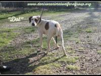 1803058 - Dot - young mixed breed approx 8 mos