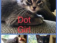 Dot, Stitch, and Ash's story These three sweeties, Dot,