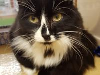 Dottie is sweet and gentle and loves to be petted. Meet