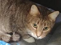 Dottie's story Dottie is a two-year-old brown tabby,