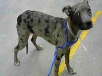 Dotty's story Dotty is a shy 7 month old catahoula mix.