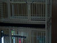Beautiful metal white commercial bird cages and 2 male