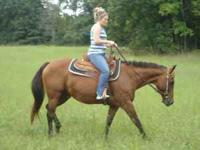 Anyone can ride this girl. She neckreins. Call  Lena is
