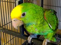 TAME HAND FED FEMALE SWEET Thea's Parrot Place is a