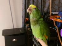Is a 4 months old baby, is tamed and sweet. Loves to be