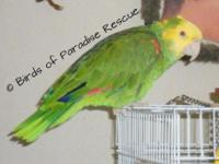 Posting for Birds of Paradise Rescue Talks a little