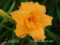 I am dividing my daylilies and have extras that need