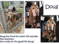 Doug's story Doug is a 10-year-old, tri-colored fellow