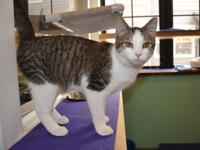 My name is Douglas and I am a 6 month old, male,