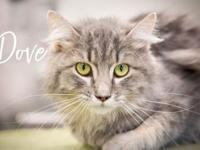 Dove's story Hi, I'm Dove! I am a sweet, happy, active,