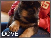 Dove is our sweet puppy. She is the most loving and