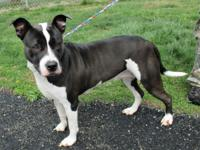 Dove is such a sweet dog, 3 years old and spayed, a
