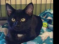 My story Dover is a playful kitten who is ready for his