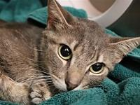 Dovey's story Dovey is a sweet girl who is spayed and