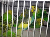 This is what I currently have. 1 Fischer Love Bird