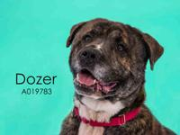 DOZER's story Hello! I am new to the shelter and my