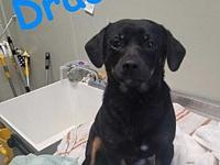 Draco's story Gentle and sweet! Draco is