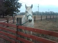 21 year old Percheron mare. Broke to ride and drive.
