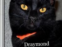 Draymond is a medium-large young cat.  This 6-month old