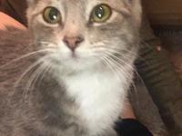 Drea is a sweet 6-month-old kitty who is good with