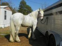 We have beginner safe, seasoned driving horses. We also