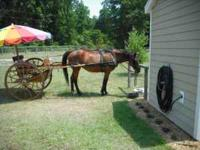 Great Driving Horse with Meadowbrook cart and Leather