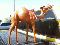 I am selling a wonderful vintage leather Dromedary