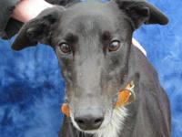 Drysdale is a Handsome Black Male For more information