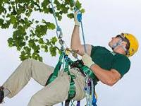 Dublin Tree Services covers all forms of Tree Surgery