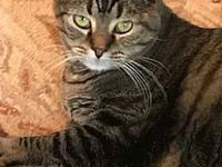 My story Dublin is an eight year old tabby who is a